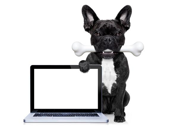 dog-with-computer